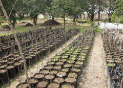 توزیع ۵۰۰ هزار اصله نهال جنگلی و فضای سبزی در البرز