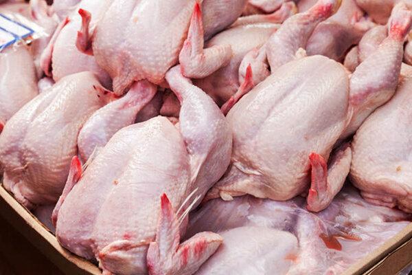 توزیع مرغ در اسفند متعادل میشود
