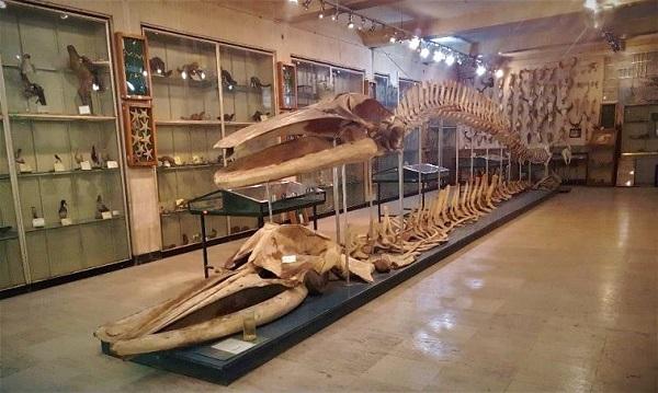 مجوز فعالیت موزه جانورشناسی کرج صادر شد